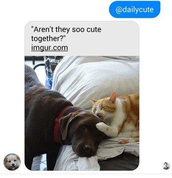 commande @dailycute sur Facebook Messenger
