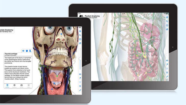 Pocket Anatomy gratuite ! Découvre l'anatomie du corps humain