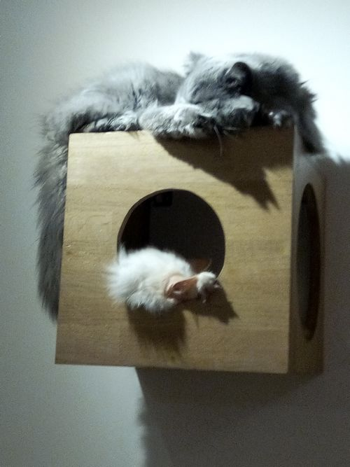 chapristea sommeil chat