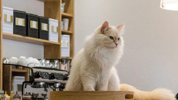 On a visité un bar à chats (le Chapristea à Toulouse) !
