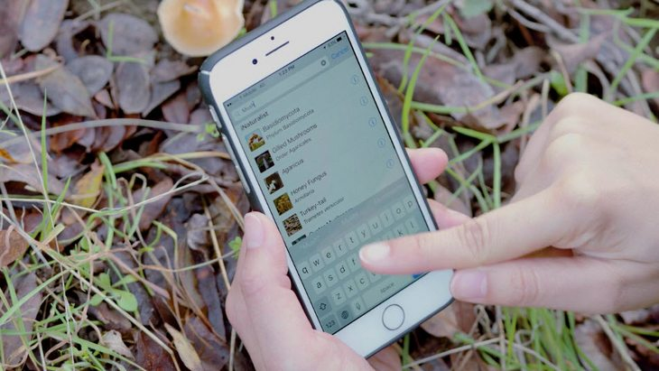 iNaturalist, l'application pour identifier les animaux et plantes autour de toi