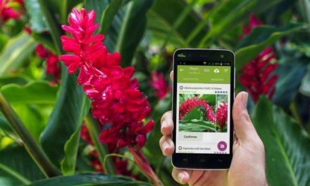 Seek et Plantnet : deux applications pour identifier les plantes et les fleurs