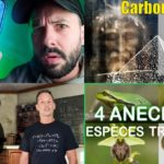 Apprendre avec YouTube #179 : Le Grand JD, Biosfear, Science Etonnante, Startdust, Lumni…