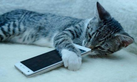 MeowTalk : tu vas enfin pouvoir comprendre ton chat